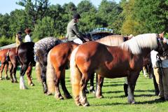 Suffolk Horse Spectacular -Marks Hall September 2018