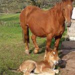 2020 Foals