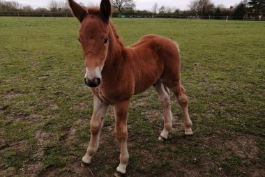 New Foals for 2021